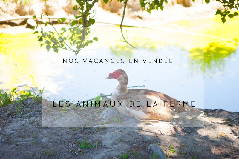 Nos vacances en Vendée – Les animaux de la ferme