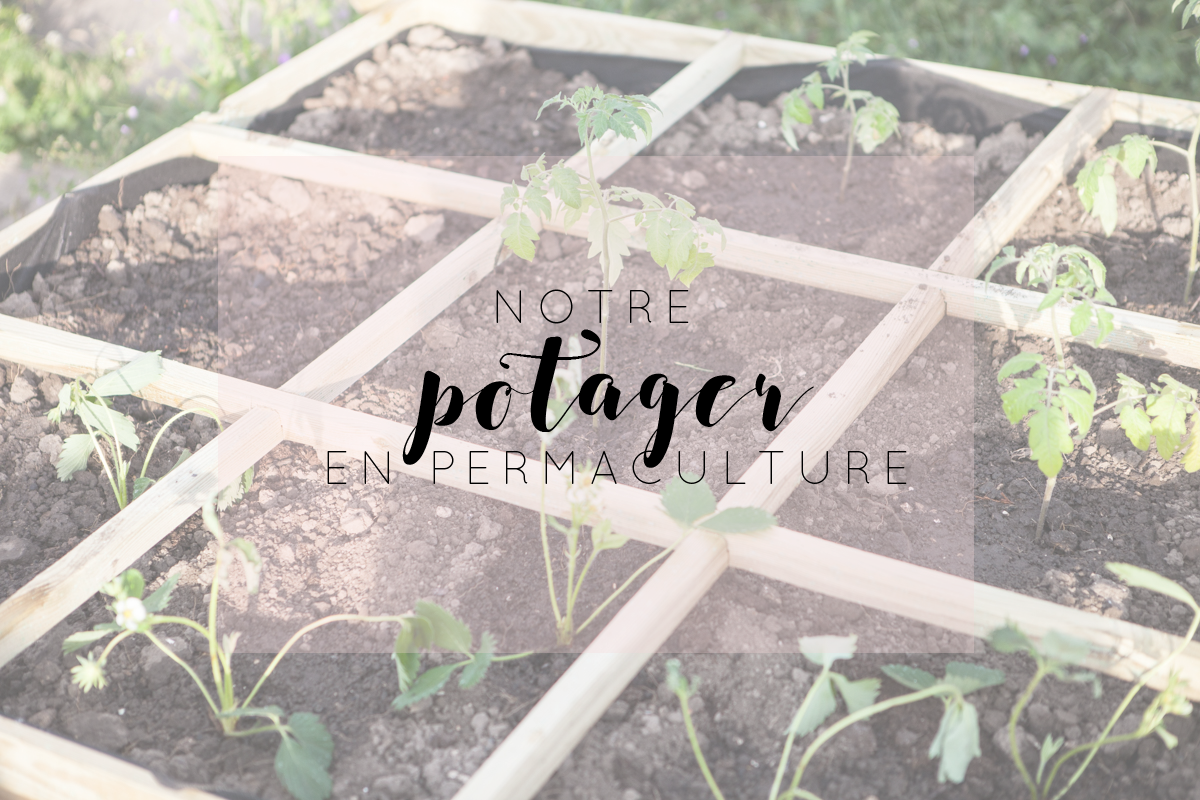 Notre potager en permaculture