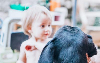 Protéger ses enfants et ses animaux des parasites